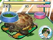 Opieka nad żółwiem