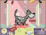 SPA dla zwierząt gra online