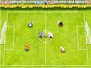Zwierzęce mistrzostwa w piłkę nożną
