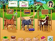 Gra opieka nad końmi