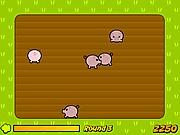 Świnki na polu