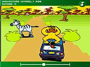 Przejażdżka lwa na samochodzie