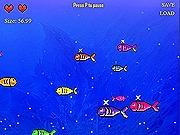 Opieka nad rybkami w Akwarium