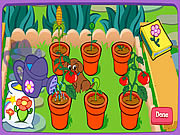 Magiczna Roślina doniczkowa