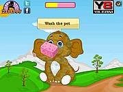Opieka nad słoniem w zoo