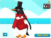 Opieka nad pingwinem